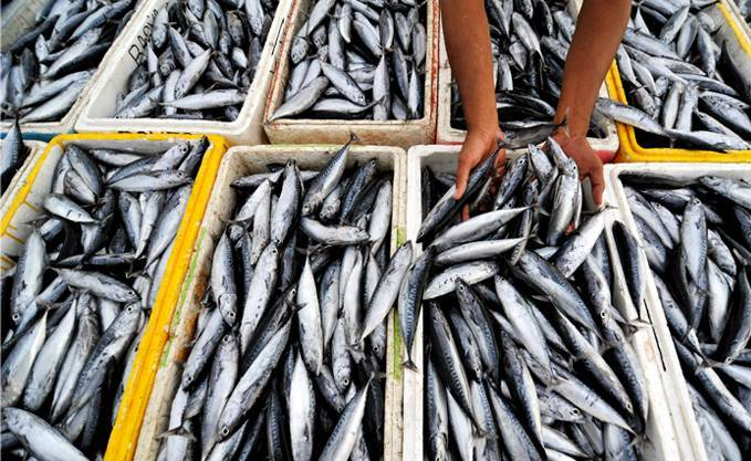 News) TANZANIA- Tanzania imports fish from China because of illegal